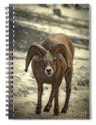 A Close Encounter Spiral Notebook