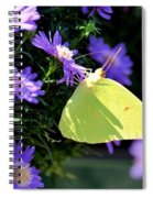 A Clouded Sulphur On Lavender Mums Spiral Notebook