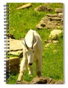 A Goat Coming Down The Trail Spiral Notebook