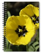A Couple Of Bright Yellow Tulip Flowers Spiral Notebook