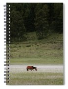A Couple Of Horses Standing Spiral Notebook
