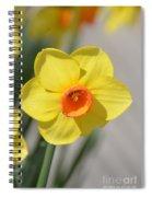 A Daffodil Hello Spiral Notebook