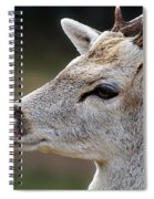 A Dear's Look Spiral Notebook
