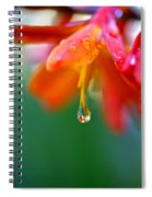 A Delicate Touch - Water Droplet - Orange Flower Spiral Notebook