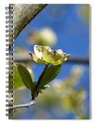 A Dogwood Blossom Spiral Notebook