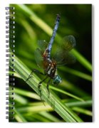 A Dragonfly Spiral Notebook
