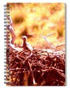 A Eaglet In Down Spiral Notebook