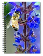A European Honey Bee And It's Flowers Spiral Notebook