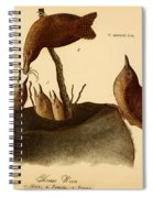 A Family Of House Wrens Spiral Notebook