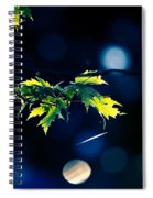 A Few Leaves In The Sun Spiral Notebook