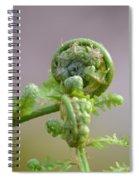 A Fiddlehead Abstract Spiral Notebook