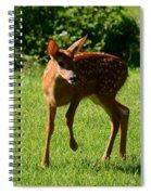 A Fine Little Fawn Spiral Notebook