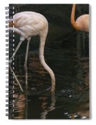 A Flamingo With Its Head Under Water In The Jurong Bird Park Spiral Notebook