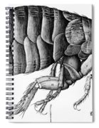 A Flea From Microscope Observation Spiral Notebook