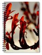 Flamingo Dancer Spiral Notebook