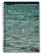 A Forster Tern Fighting The Winds Out At Sea Spiral Notebook