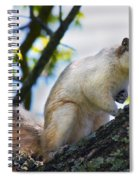 A Fox Squirrel Poses Spiral Notebook