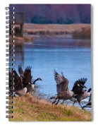 A Gaggle Of Geese Spiral Notebook