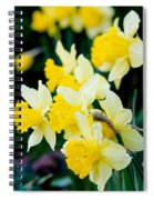 A Gathering Of Daffodils Spiral Notebook