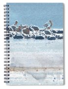A Gathering Of Pelicans Spiral Notebook