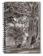 A Gentleman Sitting Beneath A Large Native Tree In British Ceylon Spiral Notebook