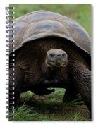 A Giant Tortoise Walks Along The Rim Spiral Notebook