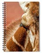 A Giraffe Spiral Notebook