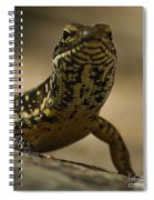 A Golden Skink Spiral Notebook