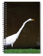 A Great Egret On Hilton Head Island Spiral Notebook