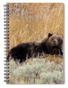 A Grizzily On A Buffalo Carcass Spiral Notebook