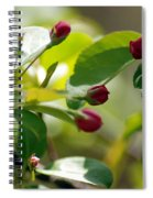 A Group Of Red Tree Flowers Spiral Notebook