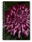 A Happy Birthday Wish With An Elegant Maroon And Pink Mum Spiral Notebook
