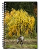 A Horse And A Willow Tree Spiral Notebook