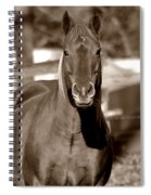 A Horse Is A Horse II Spiral Notebook