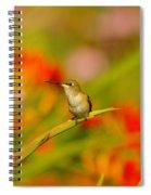 A Humming Bird Perched Spiral Notebook