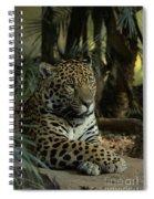 A Jaguar's Gaze Spiral Notebook