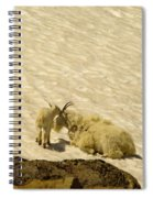 A Kiss For Mom Spiral Notebook