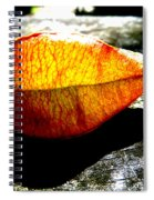 A Lantern Lit By Sunlight Spiral Notebook