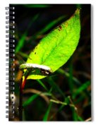 A Leaf... Spiral Notebook