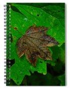 A Leaf Upon A Leaf Spiral Notebook