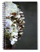 A Lichen Abstract 2013 Spiral Notebook