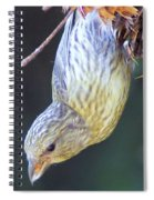 A Little Bird Eating Pine Cone Seeds  Spiral Notebook