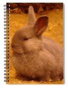 A Little Bunny Spiral Notebook