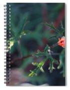 A Little Peach Flower Bud Spiral Notebook