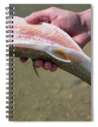 A Man Cleans A Lake Trout Fish Spiral Notebook