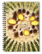 A Mexican Golden Barrel Cactus With Blossoms Spiral Notebook