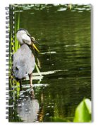 A Missing Frog Spiral Notebook