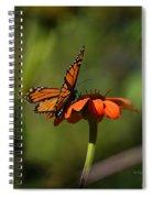 A Monarch Butterfly 4 Spiral Notebook
