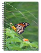 A Monarch Butterfly At Rest Spiral Notebook