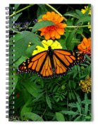 A Monarchs Colors Spiral Notebook